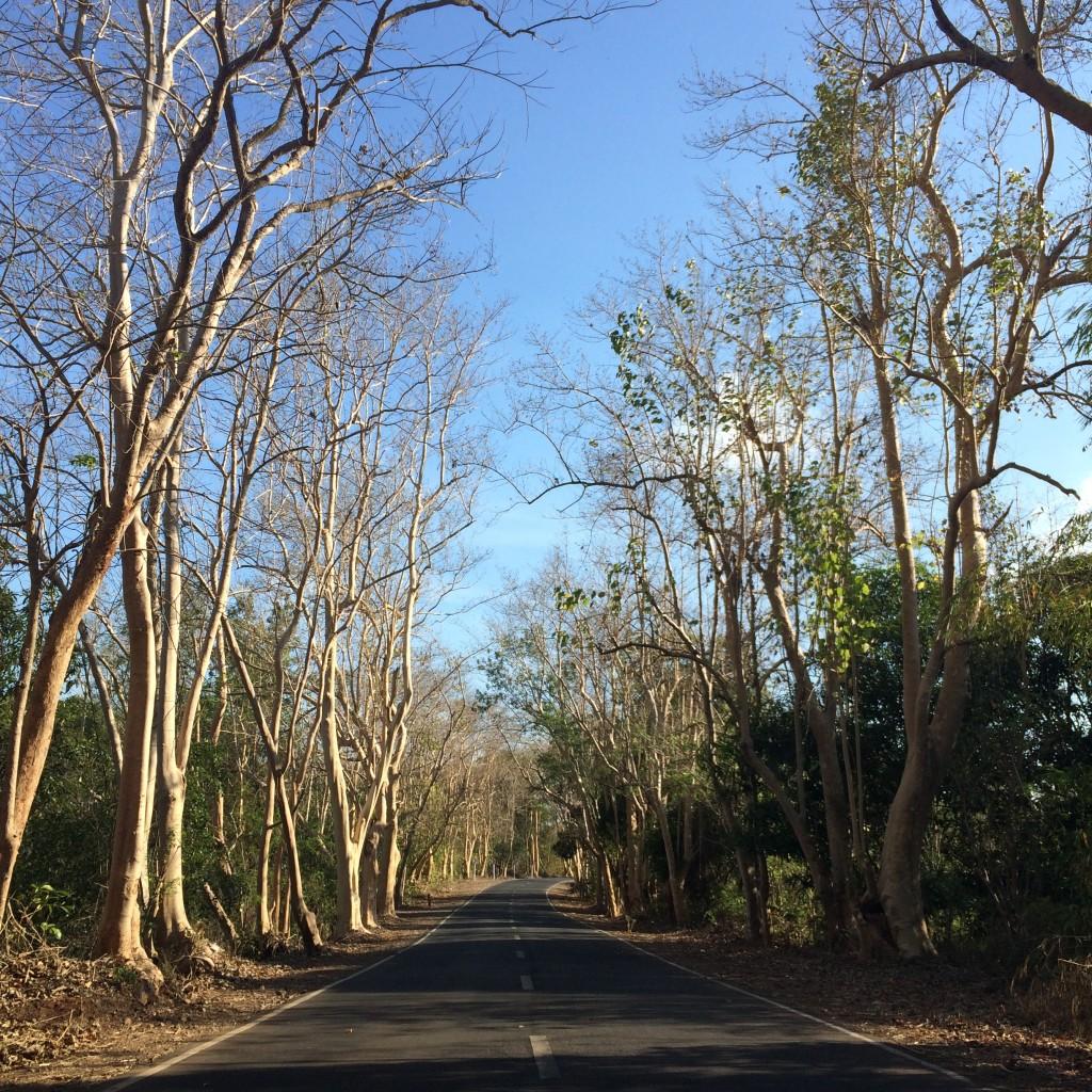 Road To Ilocos
